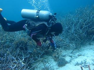 西表島の海のリゾート・メラマウリゾートで今日はサンゴ保全活動