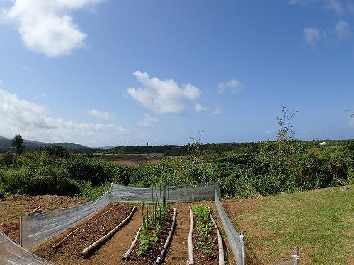 西表島で貸切ボートリゾートの菜園日記
