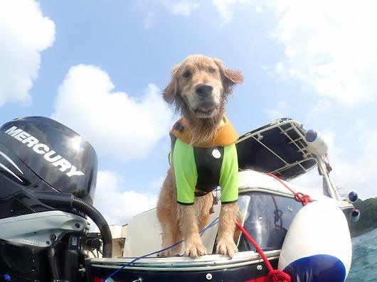 ペットと一緒にボートチャーター石垣島より