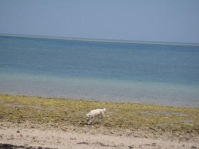 西表島のビーチを駆け回る