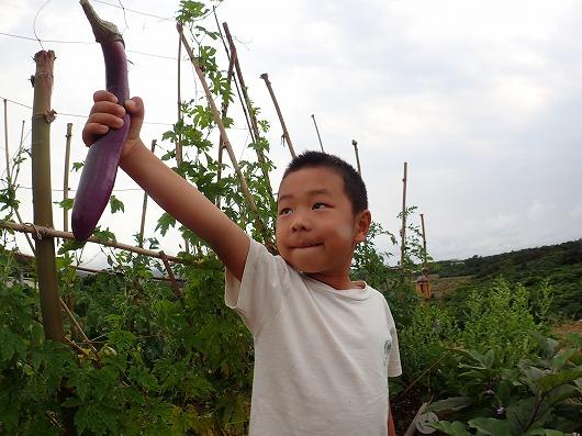西表島のシュノーケリングサービスメラマウリゾートの菜園日記
