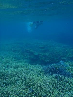 西表島の海でシュノーケリング