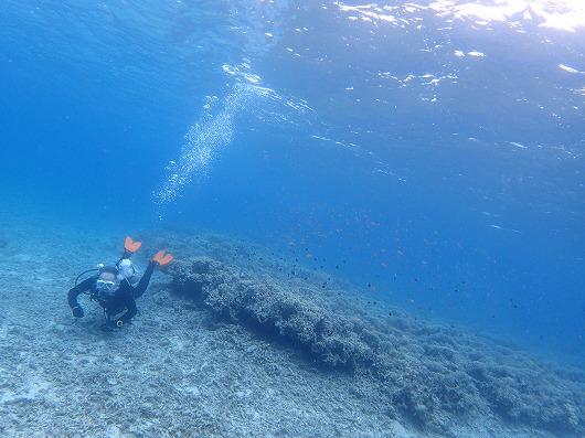今年は石垣島を飛び越えボートチャーター貸切ファンダイビングを西表島で!