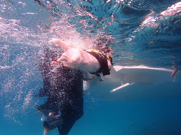 ペットと石垣島から奥西表貸切ボートチャーターシュノーケリング&釣りツアー