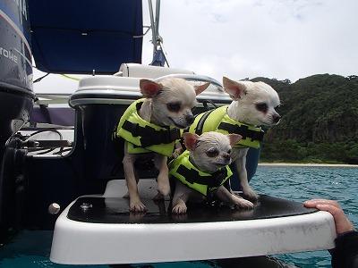 西表島にペットも一緒のツアーなら貸切ツアーのメラマウリゾート