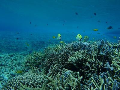 美しいサンゴの海