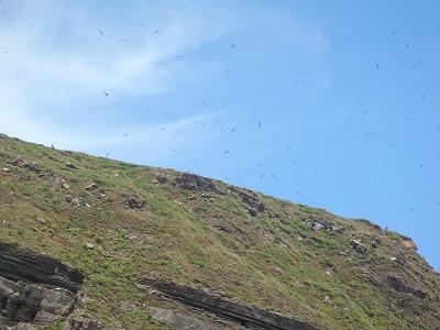 無数の野鳥の飛びかうオガン島