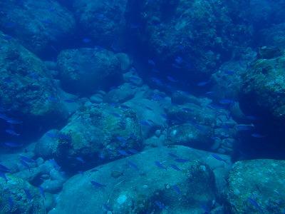 魚の大きさの違うオガン島