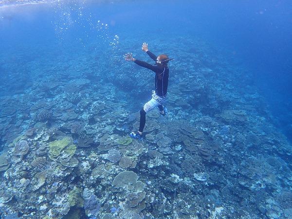 石垣島や竹富島や小浜島から奥西表ボートチャーターシュノーケル&釣りツアー