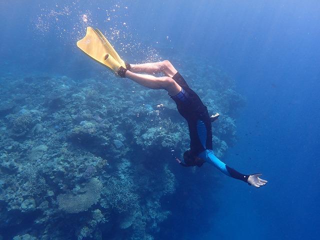奥西表シュノーケリング貸切ボートチャーター&釣りコース