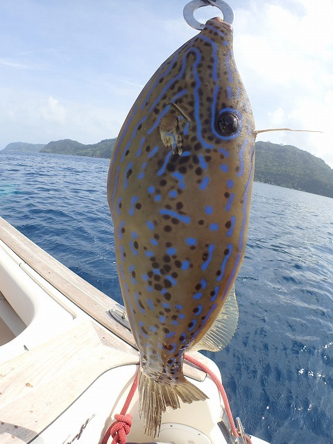 奥西表貸切ボートチャーターシュノーケリング&釣りコース