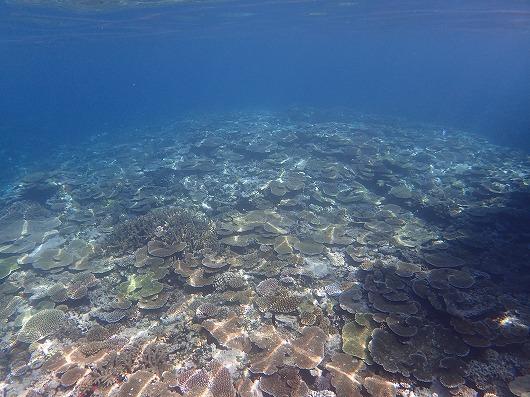 奥西表&バラス島貸切ボートチャーターシュノーケリングツアー