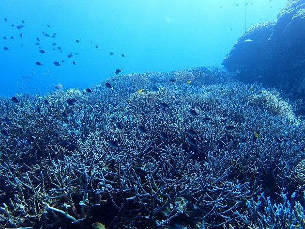 美しい西表島の海を守っていくために