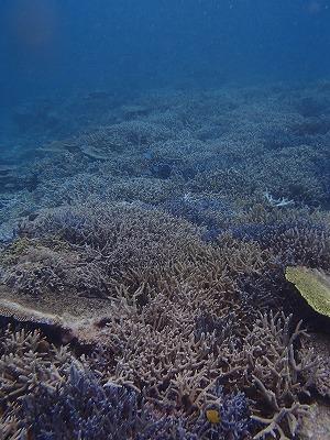 美しい西表島の海でシュノーケリング