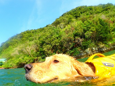 ペットと一緒に石垣島から西表島へ貸切ツアー